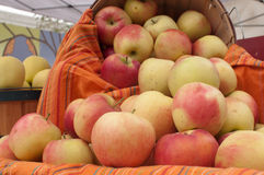 Basket of apples. At the Farmers Market in Boise, Idaho Stock Photos
