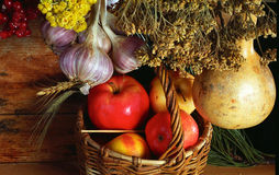 The basket of apples. Rural still life with the basket of apples.The yield of the garden Royalty Free Stock Photo