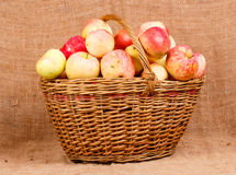 Basket with  apples Royalty Free Stock Images