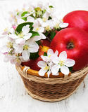 Basket with apples and apple tree blossoms Royalty Free Stock Photo