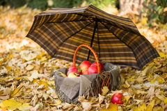 Basket with apples on autumn leaves in the forest Royalty Free Stock Photos