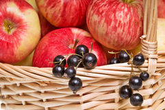 Basket of Apples and Blackcurrants Stock Image