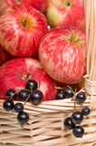 Basket with Apples and Blackcurrants Stock Photography