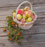 Basket with apples and a branch of wild rose Stock Image