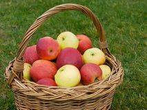Basket of apples, closeup Stock Photos