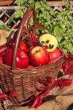 Basket with apples in the garden. Autumn harvest fruit. Basket full of Vitamin and fruit. Collecting apples. Stock Photo