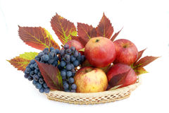 Basket with apples and grapes Stock Photography