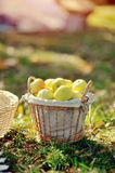 Basket with apples Stock Photos