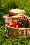 Basket with apples and herbs. Harvest - basket with apples and herbs in the grass royalty free stock images