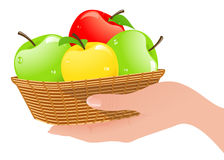 Basket with apples in human hand Stock Image