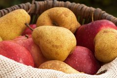 A basket of apples and pears 5 Royalty Free Stock Photography
