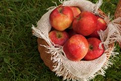 A basket of apples and pears Stock Images