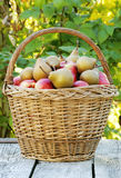 Basket with apples and pears Royalty Free Stock Images