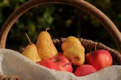 A basket of apples and pears 4 Stock Photography