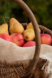 A basket of apples and pears 3 Royalty Free Stock Image