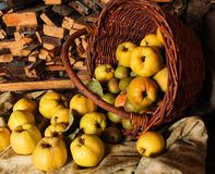 Basket with apples, quince and pear. Stock Image