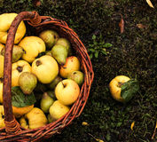 basket with apples, quince and pear. Stock Photos