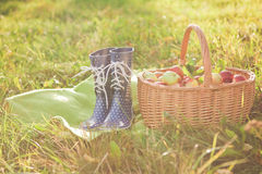 Basket with apples and rain boots Royalty Free Stock Images