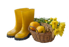 Basket with apples, a sheaf of wheat and rubber boots isolated Stock Photography