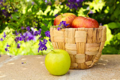Basket with apples on stone surface on beautiful flower garden Royalty Free Stock Photo