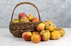 Basket with apples on the white table Royalty Free Stock Images