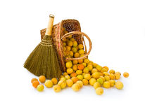 Basket with apricots and broom. Basket with small apricots and broom on white background Stock Photo
