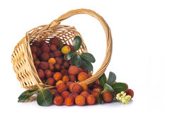 Basket with arbutus unedo fruits over white Royalty Free Stock Photography