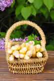 Basket with asparagus Stock Images