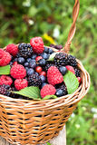 Basket of assorted berries Stock Photography