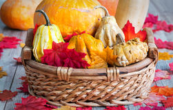 Basket of assorted, organic pumpkins stock images