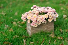 Basket with autumn flowers. On a green meadow Royalty Free Stock Photos