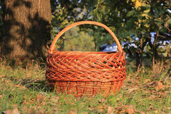 Basket in autumn forest Royalty Free Stock Photography