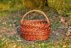 Basket in autumn forest Stock Photography