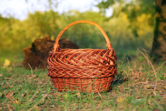 Basket in autumn forest Royalty Free Stock Photos