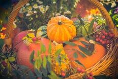 Basket autumn fruit colorful pumpkins asters Stock Photo