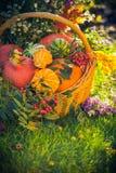 Basket autumn fruit colorful pumpkins asters Stock Photos