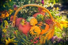 Basket autumn fruit colorful pumpkins asters Stock Image