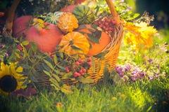 Basket autumn fruit colorful pumpkins asters Stock Images