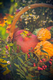Basket autumn fruit colorful pumpkins asters Stock Image