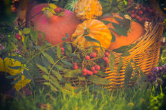 Basket autumn fruit colorful pumpkins asters Royalty Free Stock Photos
