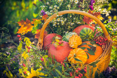 Basket autumn fruit colorful pumpkins asters Royalty Free Stock Photo