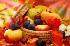 Basket of autumn fruits Stock Photography