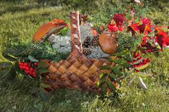 Basket with autumn fruits, berries, mushrooms, Rowan Royalty Free Stock Photography