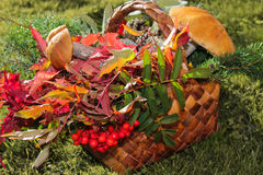 Basket with autumn fruits, berries, mushrooms, Rowan Stock Photography