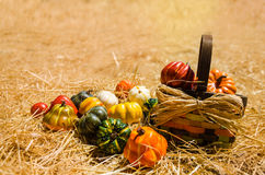 Basket with Autumn harvest vegetables background Stock Image