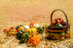 Basket with Autumn harvest vegetables background Royalty Free Stock Photography