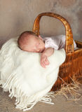 Basket with a baby Stock Image