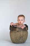 Basket Baby Stock Photography