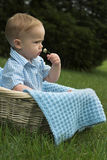 Basket Baby. Image of beautiful toddler sitting in a basket in the grass, holding a flower Stock Images