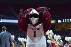 2015 basket-ball de NCAA - Temple-Cincinnati Image stock